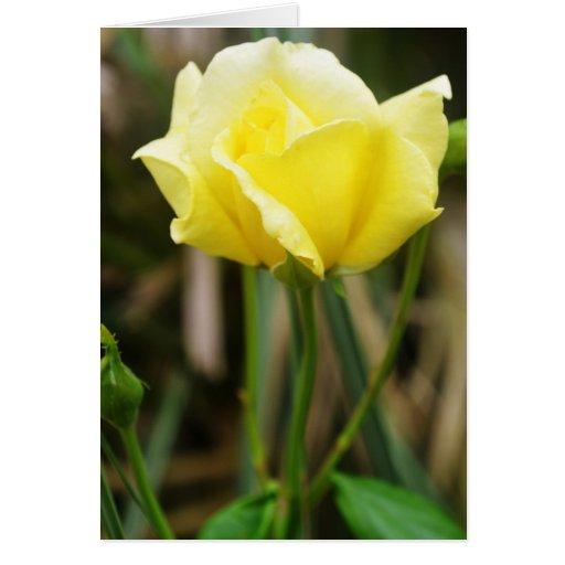 Un rosa amarillo tarjeta