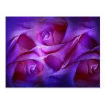 Un rosa doblado en capas postal