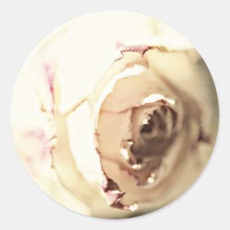 Un rosa es un color de rosa pegatina redonda
