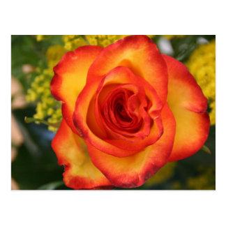 Un rosa es un color de rosa tarjetas postales