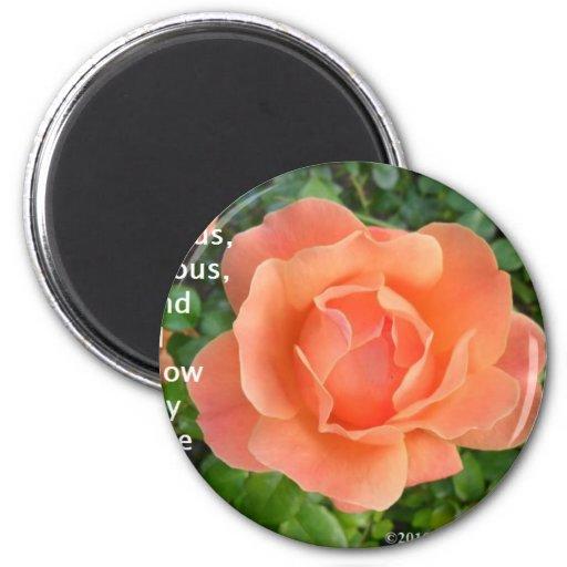 Un rosa es un Rose8 Iman