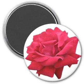 Un rosa rojo clásico imán redondo 7 cm