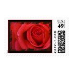Un rosa rojo para usted sello 2