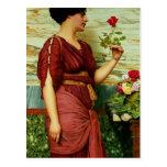 Un rosa rojo, rojo tarjeta postal