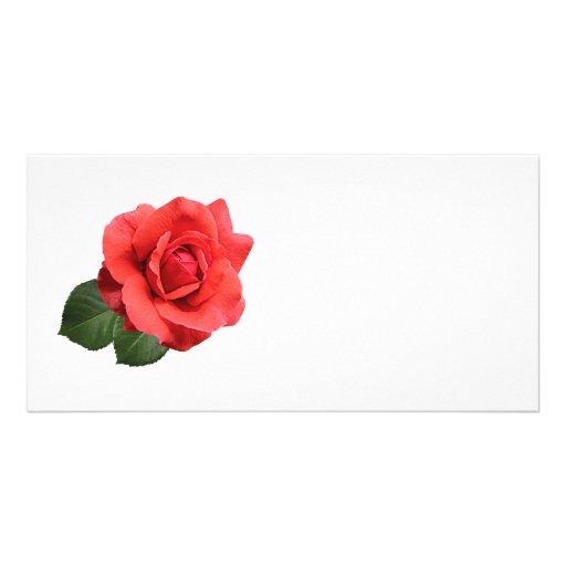 Un rosa rojo tarjeta fotográfica personalizada