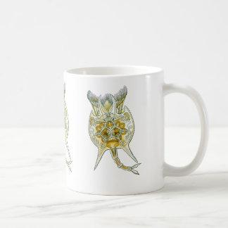 Un rotífero taza