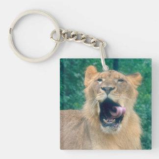 Un rugido de los leones llavero cuadrado acrílico a una cara
