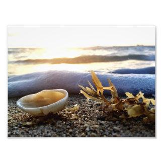 Un seashell en la orilla fotografías