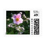 Un sello de encargo - anémona floreciente de la ca