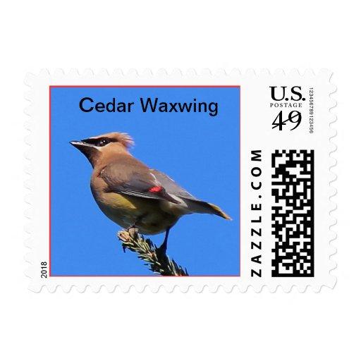 ¡Un sello de encargo con el Waxwing de cedro!