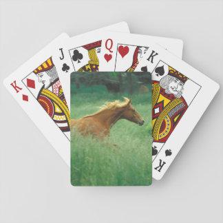 Un semental joven corre a través de un prado de al cartas de juego