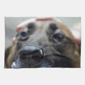 Un sentido del olfato de los perros toallas