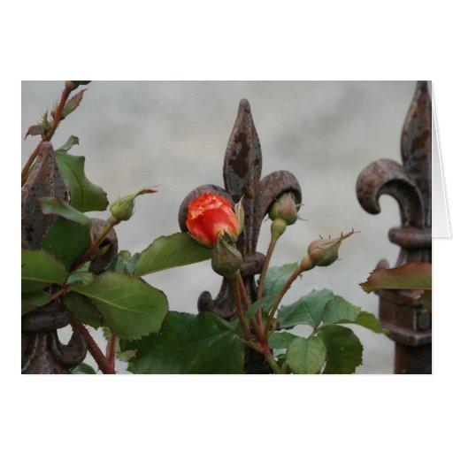 Un solo color de rosa en un jardín toscano felicitaciones