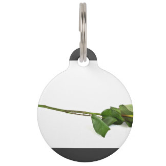 Un solo rosa de tallo largo placas de mascota