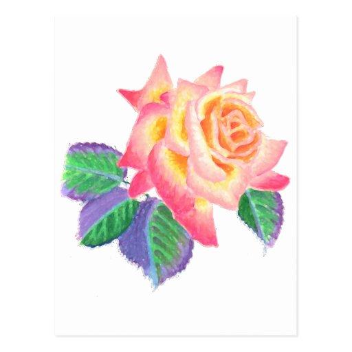 Un solo rosa de té híbrido en colores en colores postal