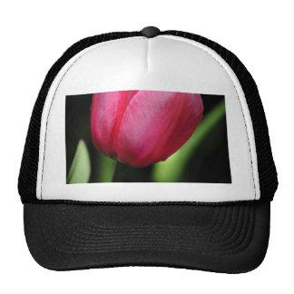Un solo tulipán gorras