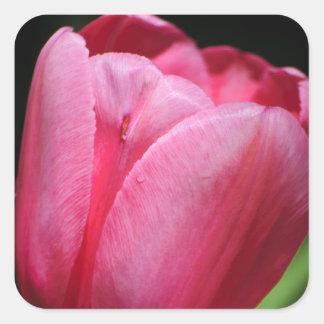 Un solo tulipán pegatina cuadrada