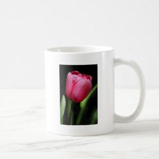 Un solo tulipán tazas de café