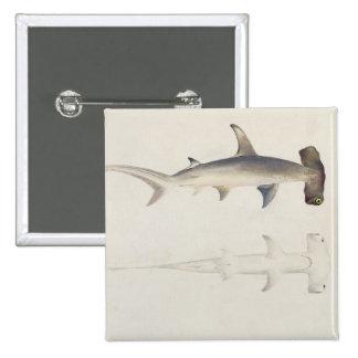 Un tiburón Martillo-dirigido, Loheia, atribuido an Pin Cuadrado