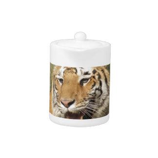 Un tigre asentado, pareciendo potente
