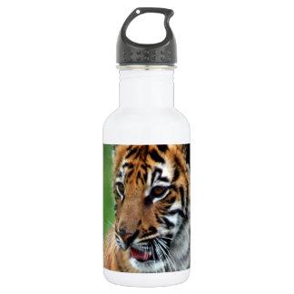 Un tigre de bebé lindo