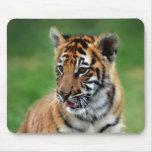 Un tigre de bebé lindo alfombrillas de ratones