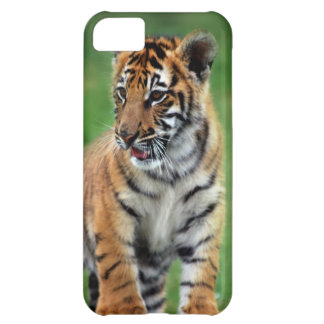 Un tigre de bebé lindo carcasa iPhone 5C