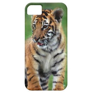 Un tigre de bebé lindo funda para iPhone SE/5/5s