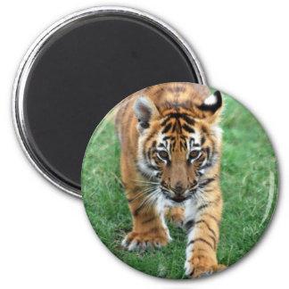 Un tigre de bebé lindo imán redondo 5 cm