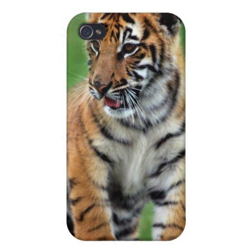 Un tigre de bebé lindo iPhone 4 funda