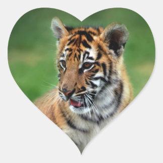 Un tigre de bebé lindo pegatina en forma de corazón