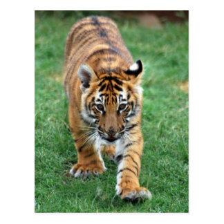 Un tigre de bebé lindo postales