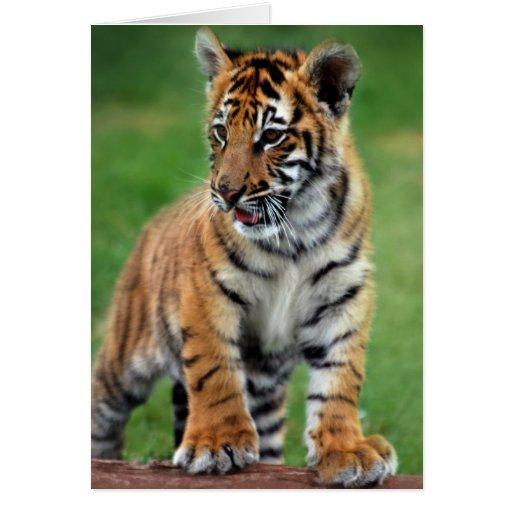 Un tigre de bebé lindo tarjetón