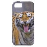 Un tigre del rugido, parque zoológico de Taiwán, Funda Para iPhone SE/5/5s