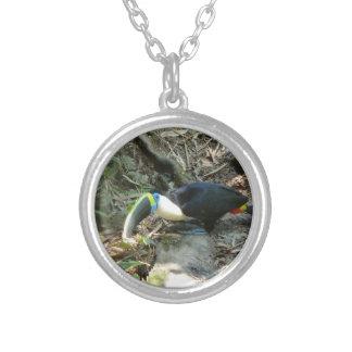 Un Toucan se encarama en raíces del árbol en el Collar Plateado