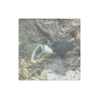 Un Toucan se encarama en raíces del árbol en el Imán De Piedra