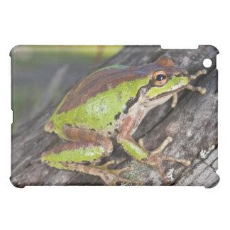 Un treefrog pacífico encaramado en un registro