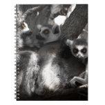 Un trío de Lemurs surafricanos Libretas