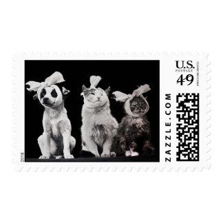 Un trío herido sellos postales