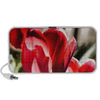 Un tulipán hermoso mini altavoces