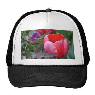 Un tulipán y otro sale de II Gorros
