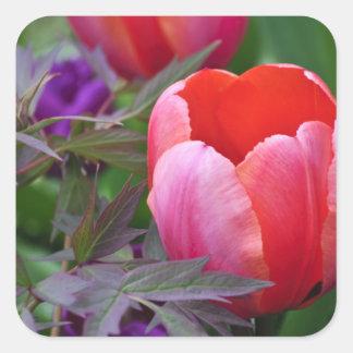 Un tulipán y otro sale de II Pegatina Cuadrada