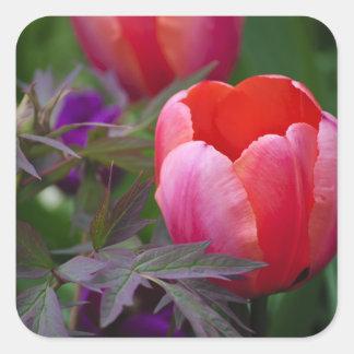 Un tulipán y otro se va pegatina cuadrada