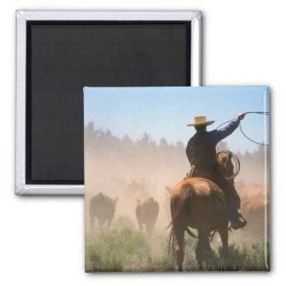 Un vaquero que elabora la manada en ganado imán cuadrado
