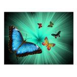Un viaje de Butterflys Postal