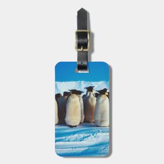 Un Waddle de pingüinos Etiquetas Maletas