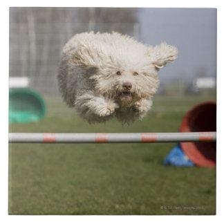 Un Waterdog portugués que salta sobre un obstáculo Azulejo Cuadrado Grande