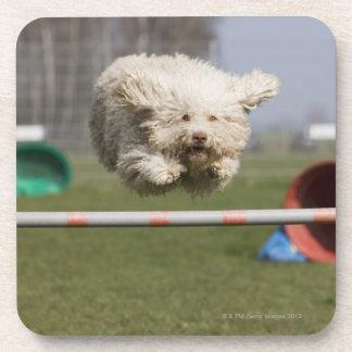 Un Waterdog portugués que salta sobre un obstáculo Posavaso