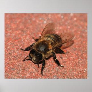 Una abeja de la miel póster