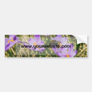 Una abeja en las flores púrpuras del azafrán, foto pegatina para coche